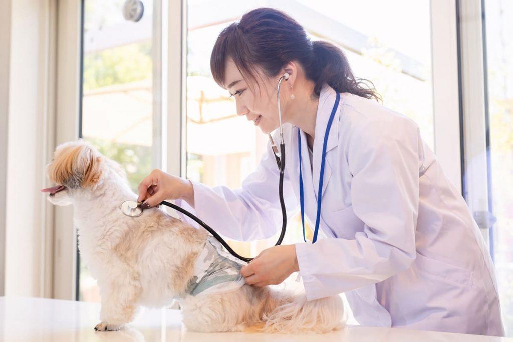 犬と獣医さんイメージ